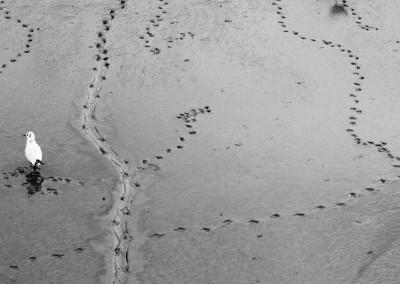 Bird foot prints - Salcombe